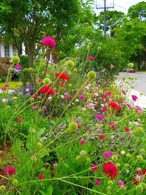 wildflower garden in the city, june 2012 by rosanne maccormick-keen, via Flickr