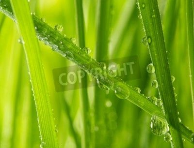 fresh grass with water drops via MuralsYourWay.com
