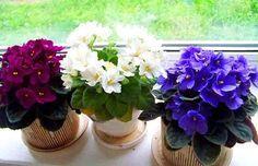 Три простых трюка для здоровья и красоты комнатных растений. Они оживут и зацветут!