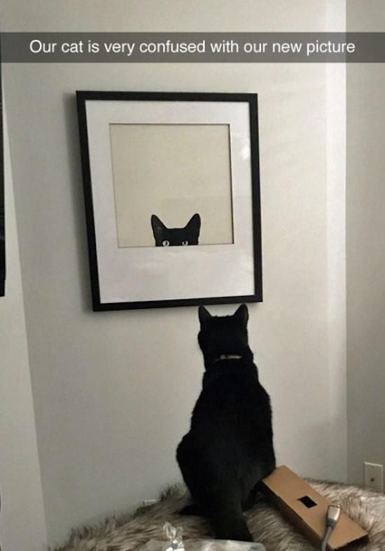 Pin by Debbie Bolton on Cats, cats, and more cats! Cat