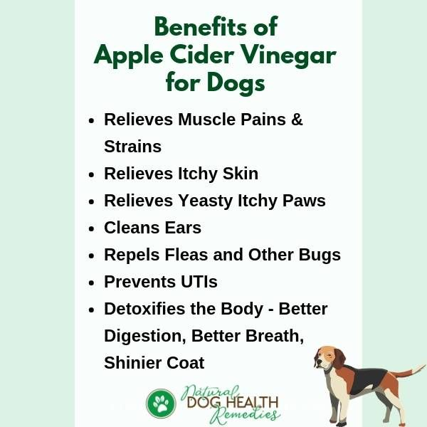 Apple Cider Vinegar For Dogs Apple Cider Benefits Apple Cider