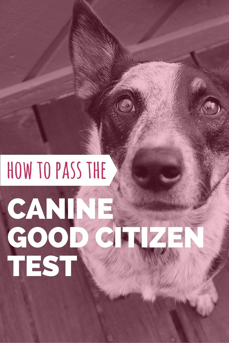 How can you be a good citizen?