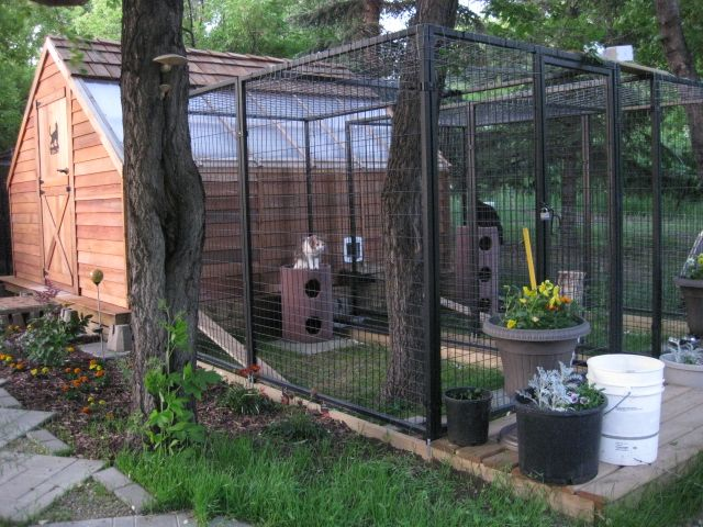 Outdoor Cat Rooms and Areas | indoor rooms are 6 x 4 outdoor runs are 10 x 5