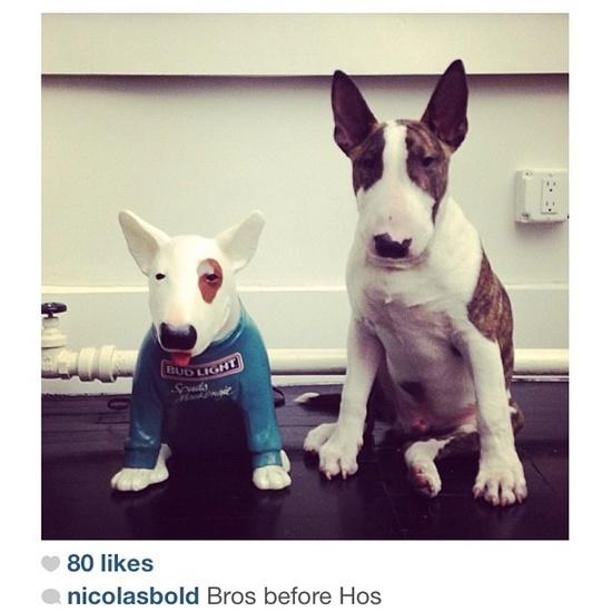 Marc Jacobs' bull terrier!