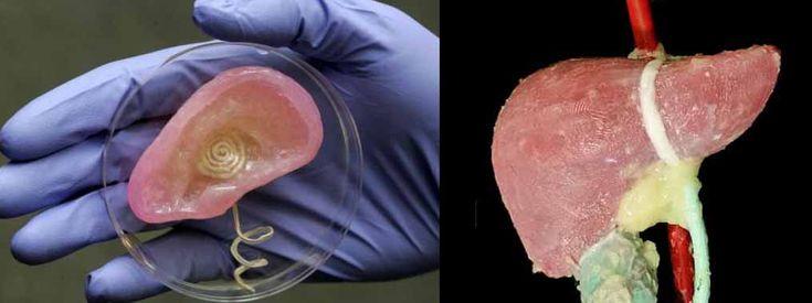Organi artificiali - Cellule staminali Stampate in 3d in Cina – STAMPA 3D STORE