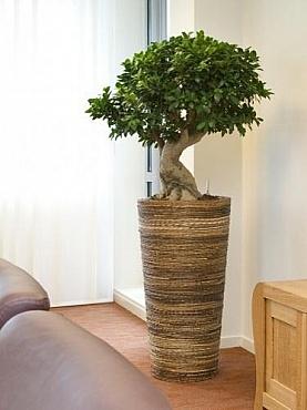 Planta Bonsai artificiala in ghiveci Bananaplanter