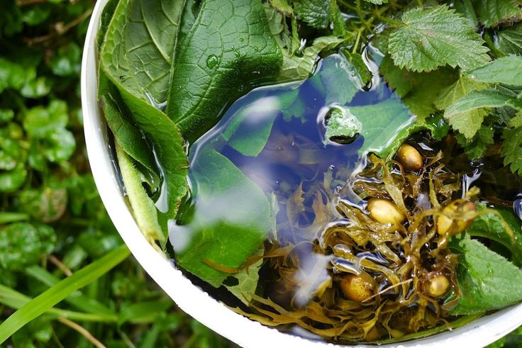 Making Seaweed Fertilizer: with added Nettles, Comfrey and Borage