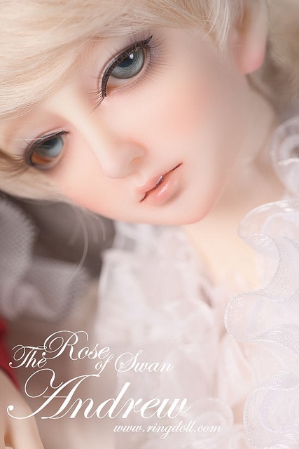 Ringdoll: The Rose of Swan----Andrew    The Roses of Swan -- twin boy and girl Julia and Andrew  Born in a noble family called Guise which is from Swan dynasty, Julia and Andrew are always the most elegant and beautiful on the land.