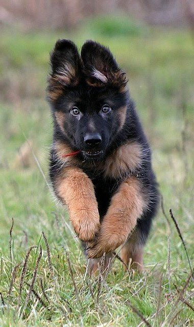 He's running into my arms. Can't wait to get one just like him!