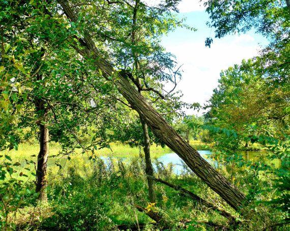 FARM PONDFarm Photography Michigan Photography by EyeLoveTheView