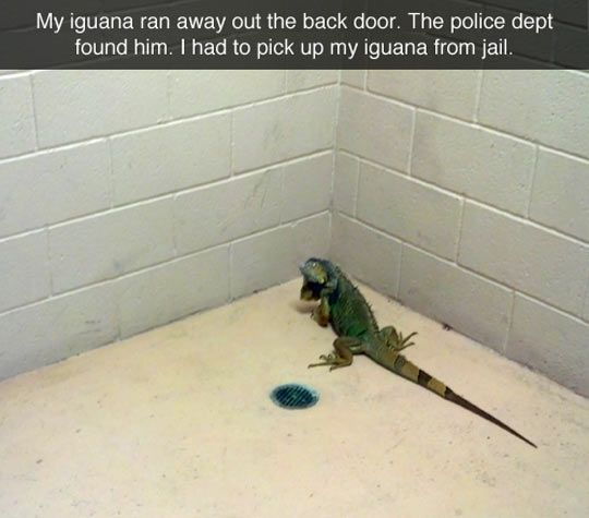 Freeing a Prisoner  // funny pictures - funny photos - funny images - funny pics - funny quotes - #lol #humor #funnypictures