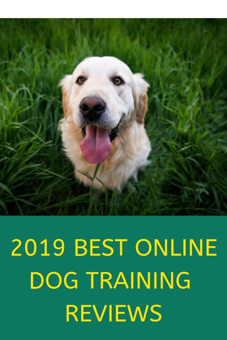 How Do You Which Dog Training Program Is Best For Your And Your