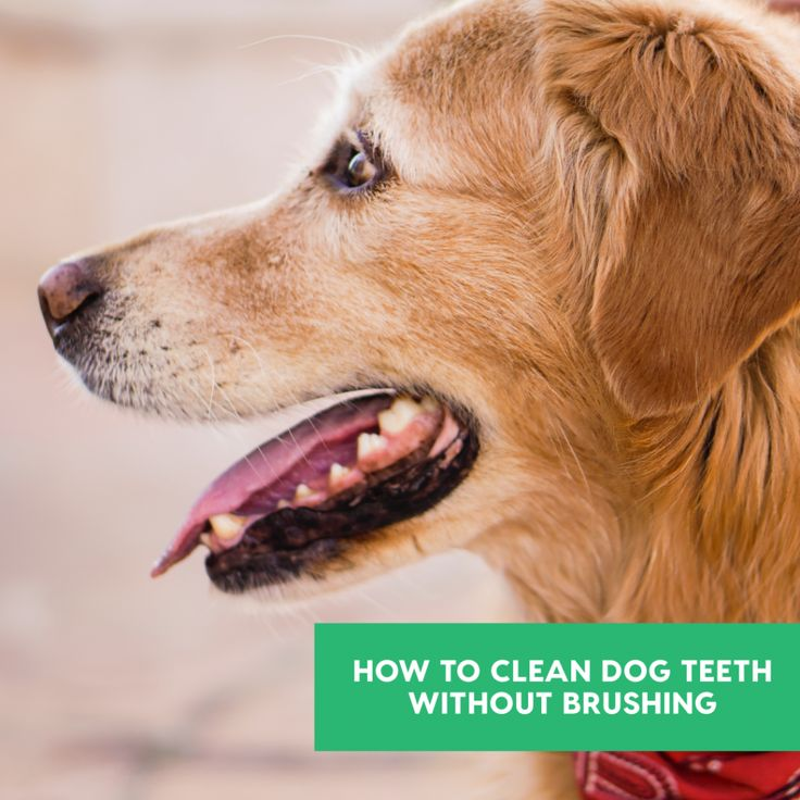 11 Simple Ways to Clean Dog Teeth Without Brushing Dog