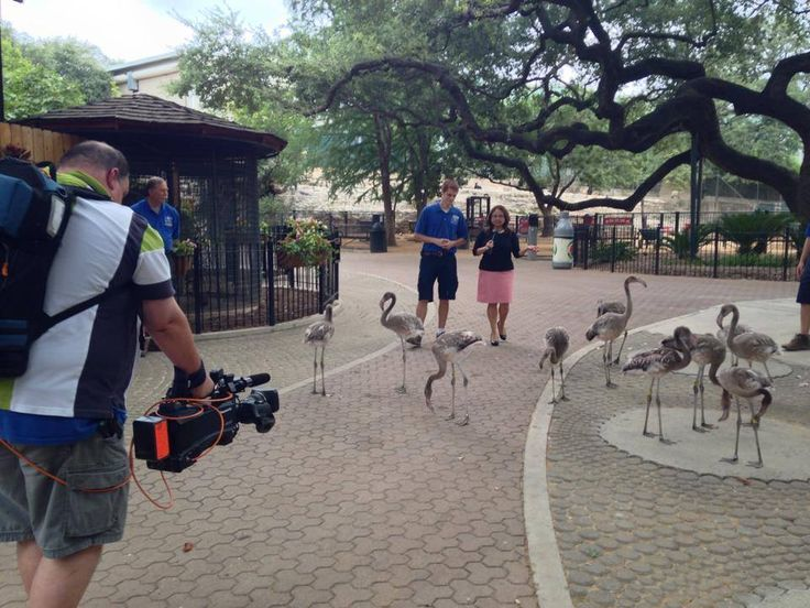San Antonio Zoo Coupons Reporter Sylvia Ricon With Fox