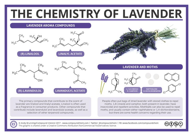 Hanging in the wardrobes of our flat, alongside our clothes, are a couple of small bags of dried lavender. Like many others, we keep them there to ward off clothes moths, but while offhandedly disc…