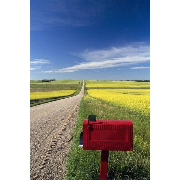 Mailbox On Country Road, Tiger Hills by Dave Reede ❤ liked on Polyvore featuring home, home decor, country home accessories, country themed home decor, country style home decor, country home decor and farmhouse home decor