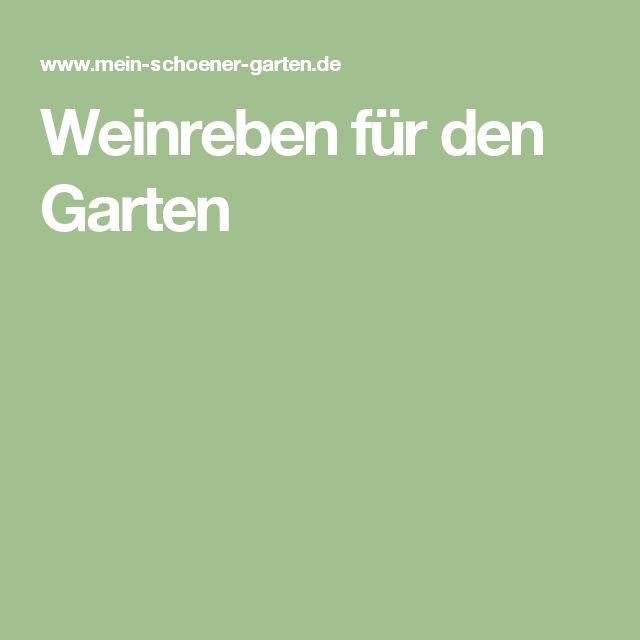 Weinreben für den Garten