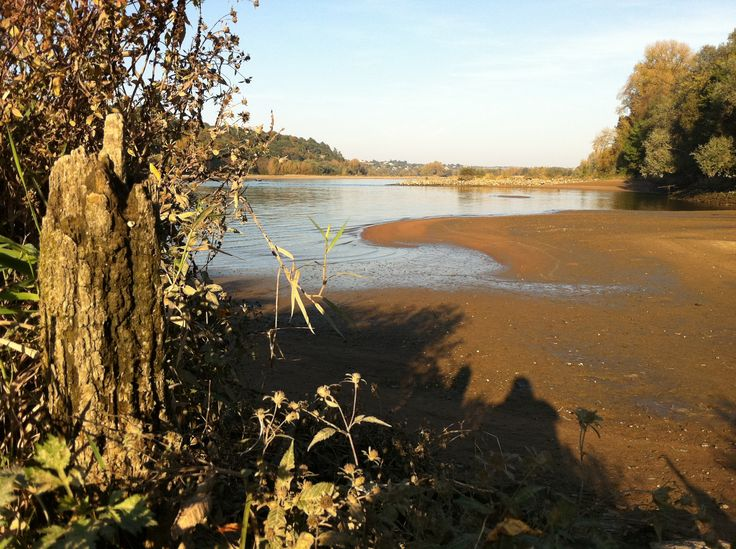 Loire - A l'étiage, à Champtoceaux