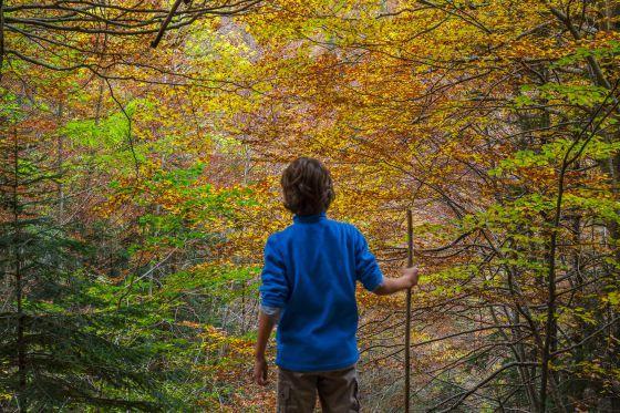 Aire libre en otoño: 15 bosques para sentir el otoño | El Viajero | EL PAÍS