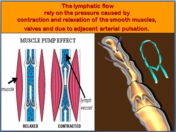 245 Best Images About Lymphatic Health On Pinterest Non
