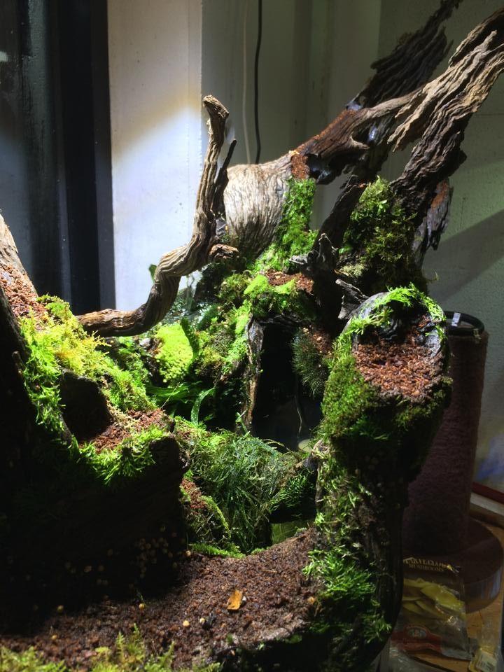 Natural reptile display