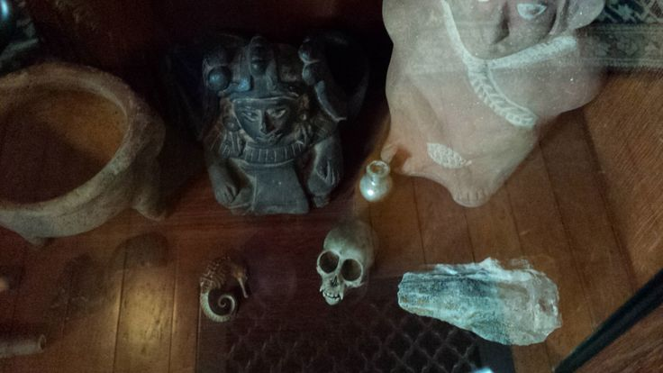 """""""Cabinet of Curiosities"""" with Monkey Skull (collection)"""