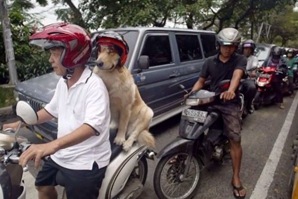 Dog riding