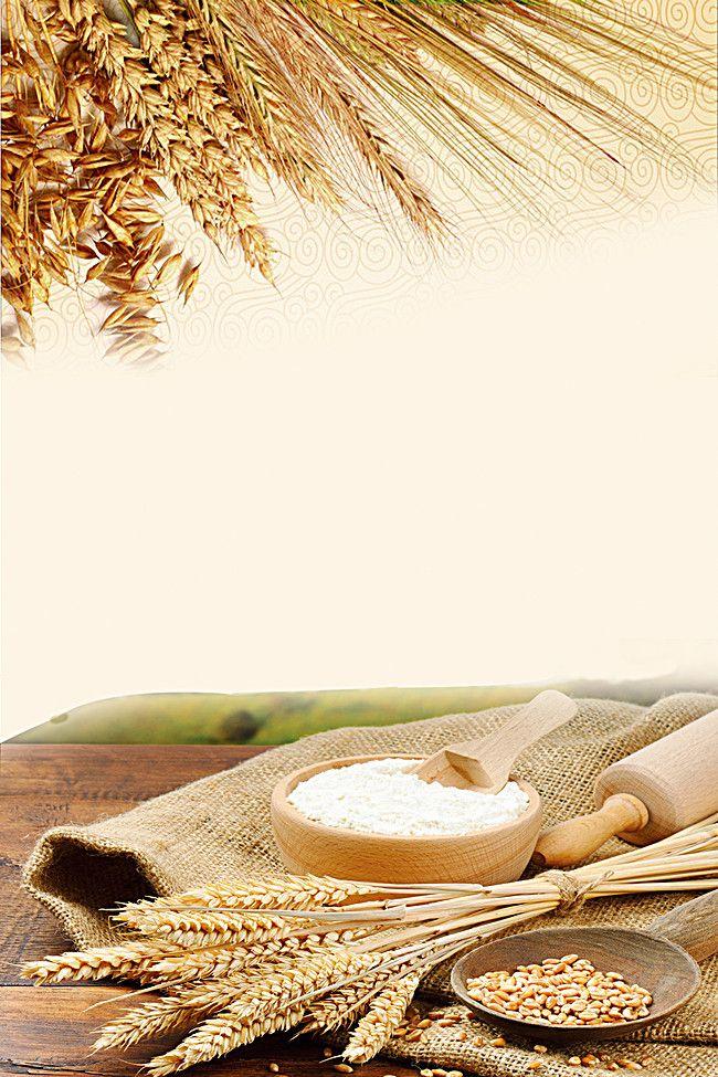 Paddy Rice Food Background Material Dicas De M 237 Dia Social Midias Sociais Gr 227 O De Trigo