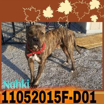 NAHKI (11052015F-D01) located in Delano, CA has 7 days Left to Live. Adopt him now!