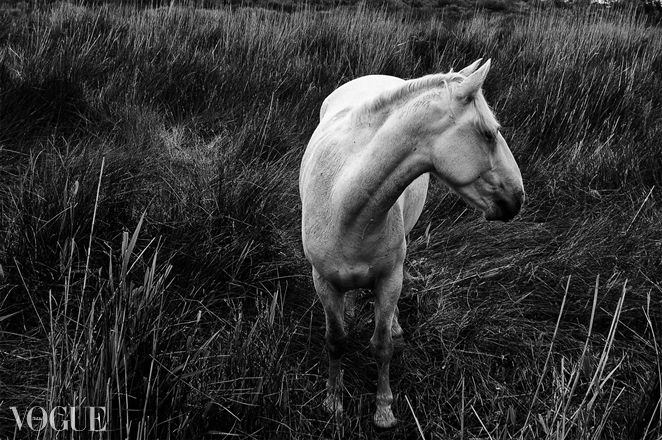 PhotoVogue, white horse, black and white
