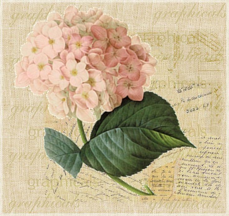 Марта жене, открытки гортензий