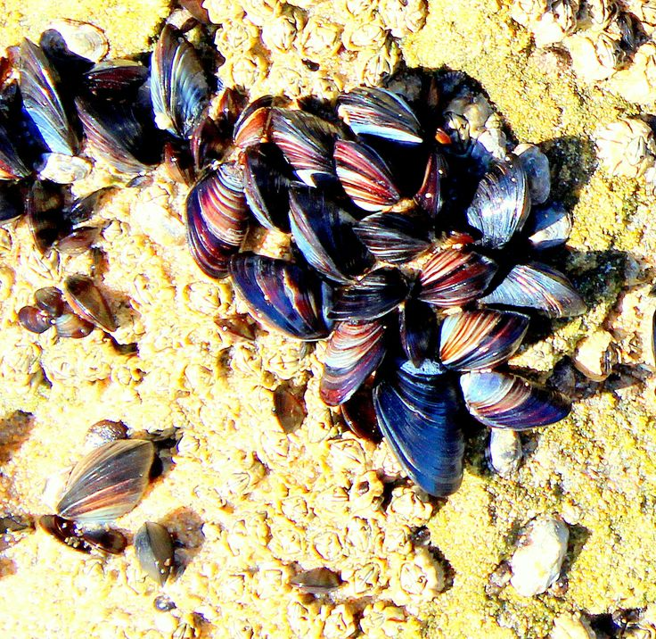 Cluster of shells on beach