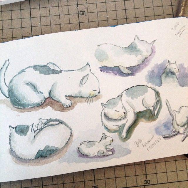 O gatinho branco da vov Ele sumiu Grandmas white cat He is missing dwgdaily watercolor sketch cat