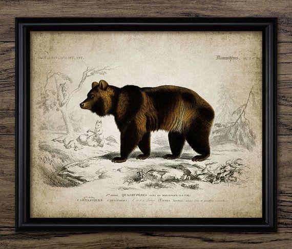 Brown Bear Print - Vintage Bear Illustration - Bear Decor - Bear Art - Digital Art - Printable Art - Single Print #222 - INSTANT DOWNLOAD