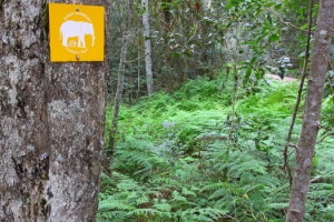 The Elephant Walk trail is a comfortable 7km to 9km hike from Diepwalle Forest Station
