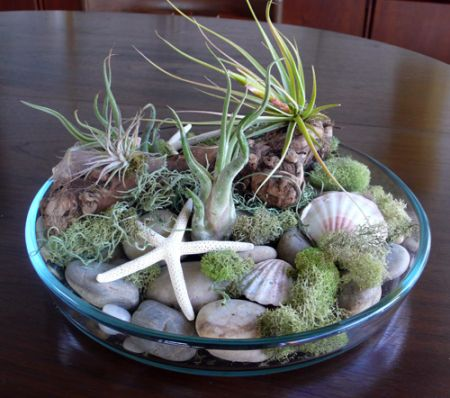 balanced coffee table air plant display