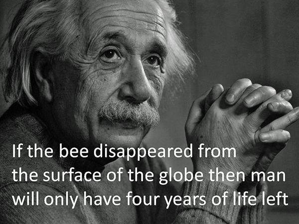 Bee Quotes: Best 25+ Bee Quotes Ideas On Pinterest