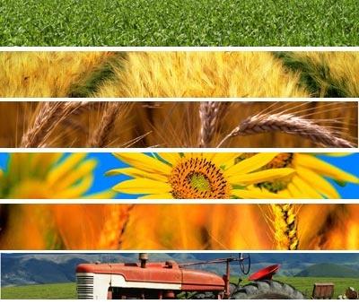 Regione Veneto: 2 milioni di euro per la biodiversità in agricoltura
