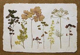 Herbarium maken: bladeren verzamelen en inplakken « Samenspel op de BSO