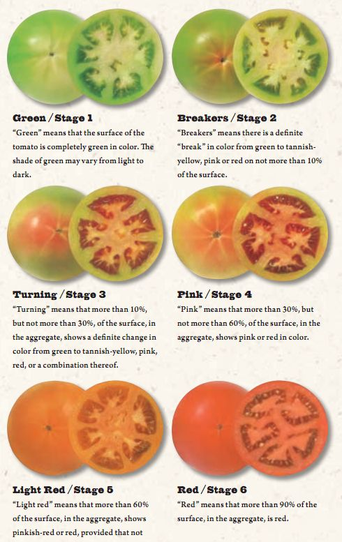 Best Harvesting Tomatoes Images On Pinterest Growing Tomatoes - Us growing table for tomatoes via map