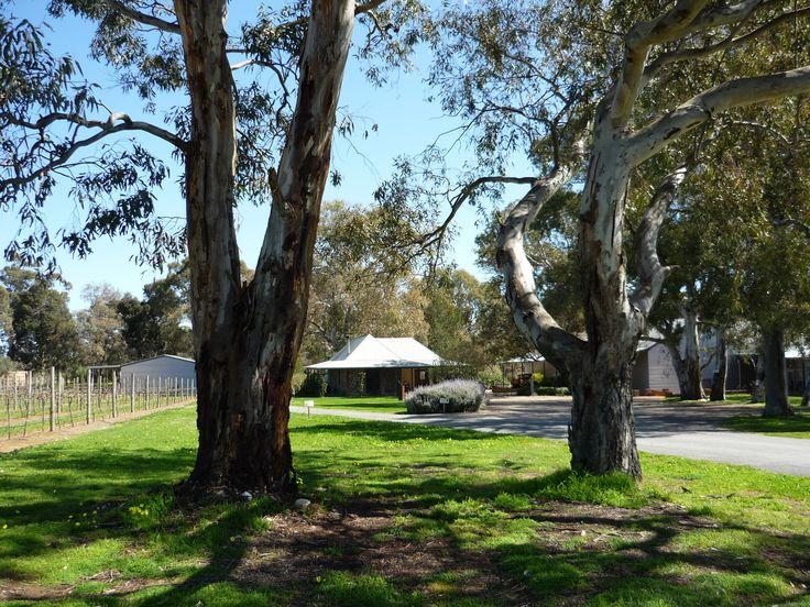 Turkey Flat Vineyards Cellar Door on the outskirts of Tanunda, Barossa Valley, South Australia. #barossa #southaustralia #wineries #wine #rural #Rustic #history #cellardoor