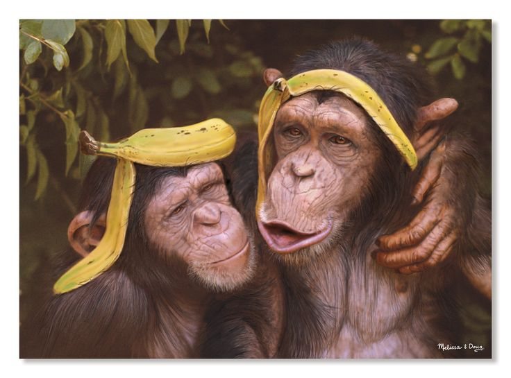 These silly chimps have found a hilarious new use for banana peels, and they can't wait to show it off! Complete the 60-piece puzzle to see this cheeky pair of best buddies, whose sweet hug and funny