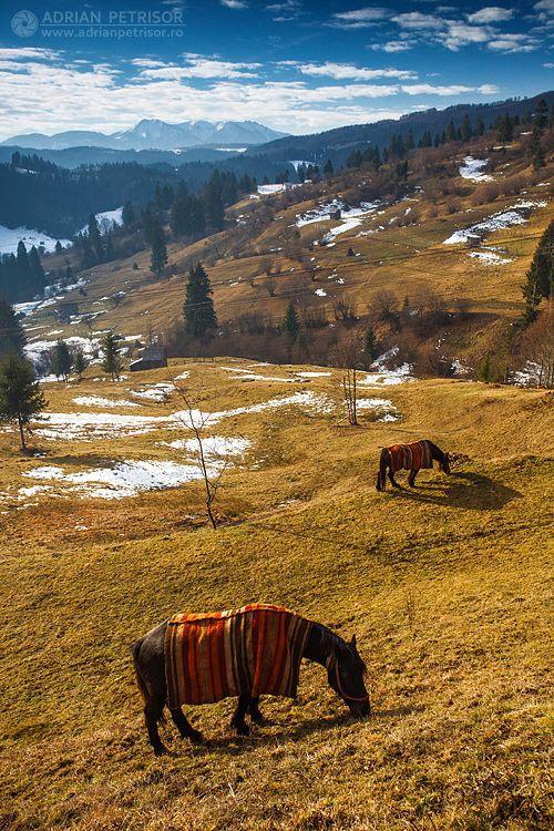 Peisaj de iarna primavaratica cu aspect tomnatic anul acesta-n Maramures :) Undeva la granita cu Bistrita-Nasaud, ianuarie 2014.