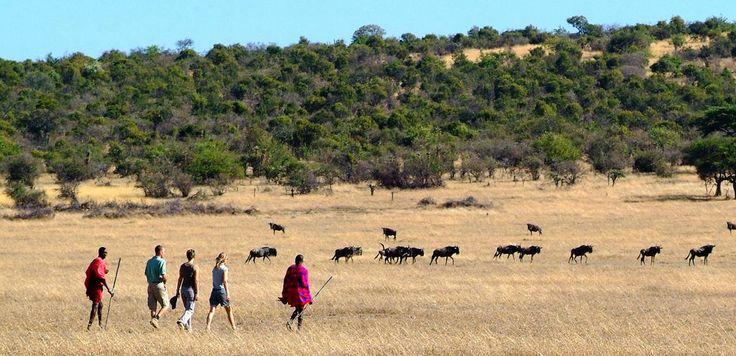 #KenyaSafariHoliday offer a great selection to Explore the Masai Mara, Lake Nakuru, Amboseli.Check out more @ http://kenya-safaris.co/on-safari.html