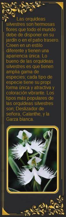 El tipo más distintivo de la orquídea salvaje es 'blanco Garza'. Crece comúnmente en Asia y ha estado floreciendo con éxito en los Estados Unidos. Su apariencia diferente lo hace sentir como un pájaro que vuela. Como su nombre lo indica, este tipo de orquídea salvaje viene solamente en las flores blancas. Un pico de la floración completamente crecido puede tener diez flores, y puede alcanzar la altura de dieciséis pulgadas.