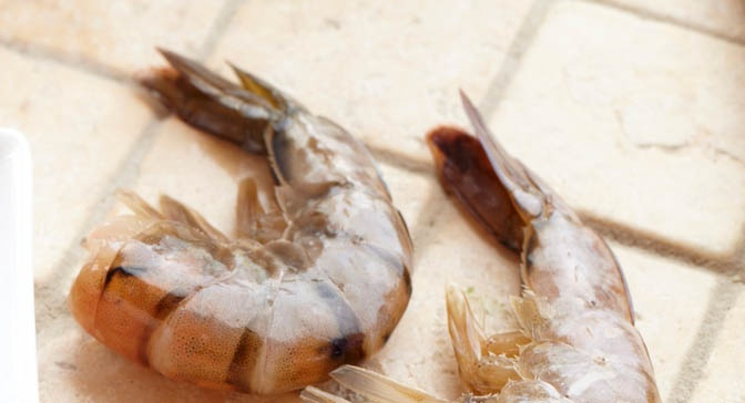 how to tell if frozen shrimp is bad