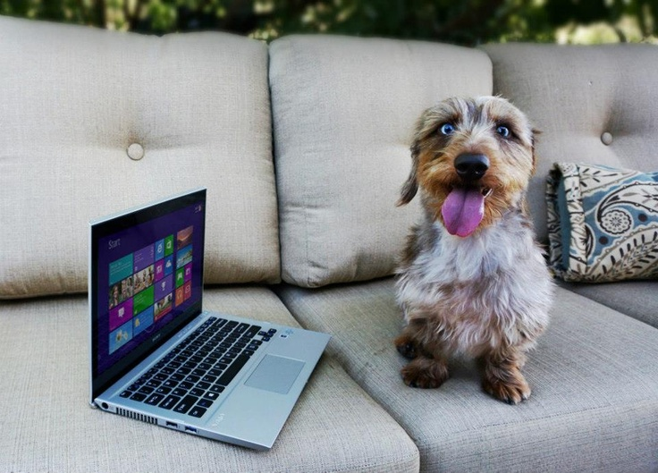 Can Dogs See Laptop Screens