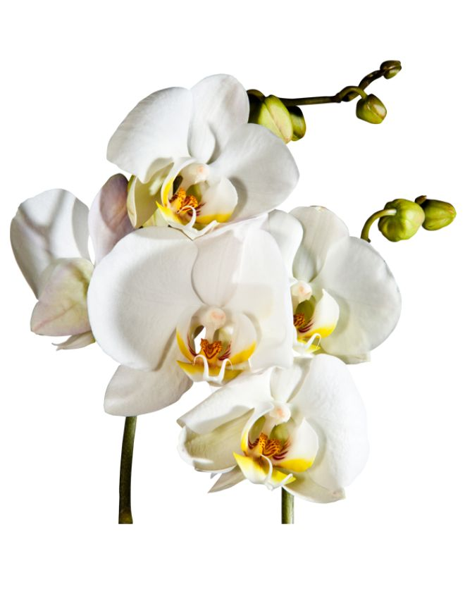 Co na ścianę do salonu? Naklejki, oczywiście! W bimago mamy dla Ciebie całą kolekcję kolorowych naklejek na ścianę z motywami kwiatowymi