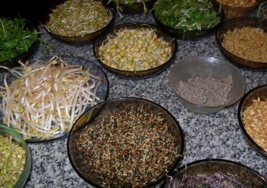Alimento superior . Brotes y germen: Recetas con brotes  germinados