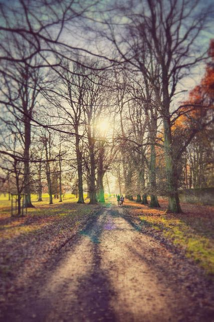 Alistair Ford: Walking Through Chatsworth Park